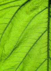 close up green leaf pattern