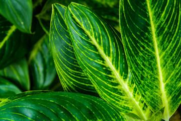Green trees and leaf greenery