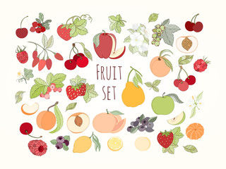 Set of vector illustration of fruits and berries