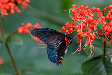 Butterfly on the flowers in botanical garden in Hong Kong.