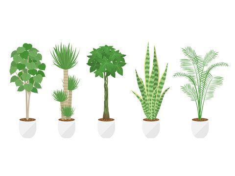 観葉植物のイラストセット