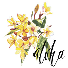 Illustration with realistic watercolor Plumeria flowers. Beautiful bouquet with tropical plants and word-Aloha. EPS 10