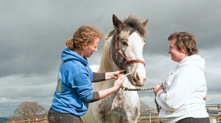 Routine wormer being administered to a horse