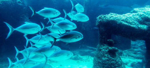 Lot of fishes in a natural dark blue water tank. Nassau, Bahamas.
