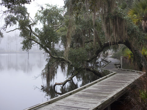 Riverside path on foggy day, Low Country, South Caroline, United States of America