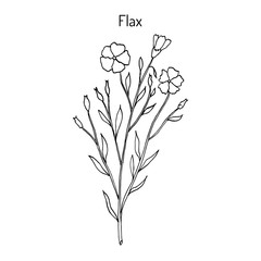 Flax plant with flowers