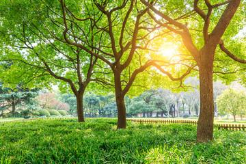 Green tree in Shanghai City Park