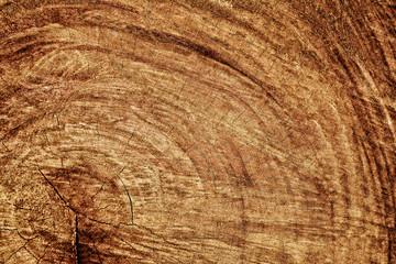 tree bark wood texture background