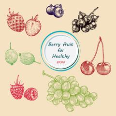 Berry fruit vector set