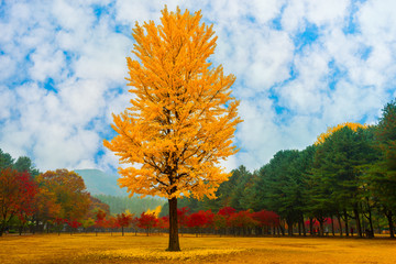 Leaves changing colors on the nami island of Korea.