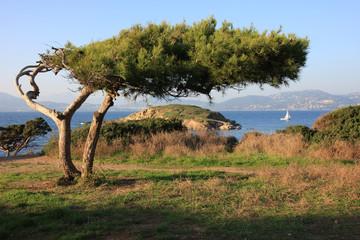 Poster Afrique Paysage de la côte d'Azur