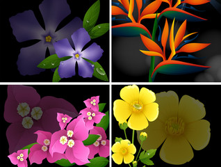 Four different kinds of flowers on black background