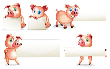 Paper template with pig