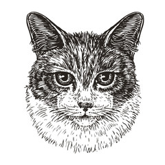 Drawn portrait of cute cat. Animal, kitty, pet sketch. Vintage vector illustration