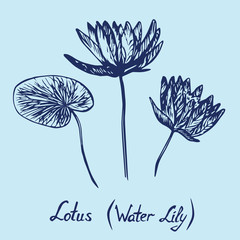 Lotus (Water Lily) flowers and leaves set, with inscription, hand drawn doodle, sketch in pop art style, isolated vector illustration (blue line)