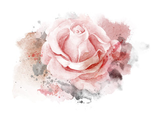 Abstract watercolor rose on white background. Watercolor painting illustration