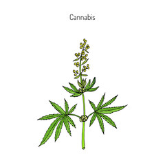 Hemp, Cannabis sativa
