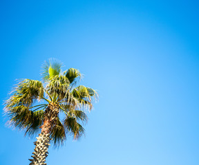travel concept - palm tree over blue sky