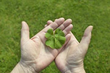 Glücksklee in der Hand -  Kleeblatt