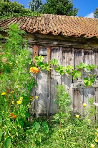 alte von rankpflanzen berwachsene holzscheune mit wildblumen davor stockfotos und lizenzfreie. Black Bedroom Furniture Sets. Home Design Ideas