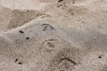 Birds Tracks in the Sand