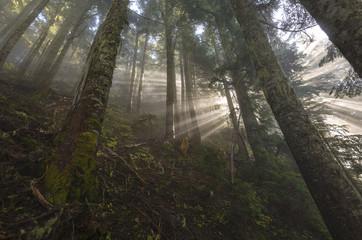 Chilliwack Fraser Valley Outdoors Forest Light