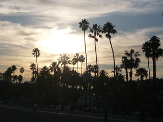 Palm tree silhouettes in sunset