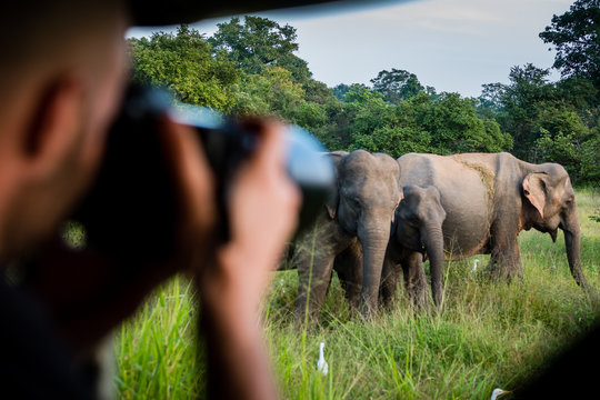 Taking pictures of a herd of elephants at a safari in Yala National Park, Sri Lanka