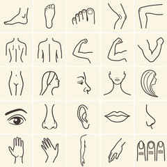 human body parts icons plastic face surgery, medical vector icons. Body sculpting system.