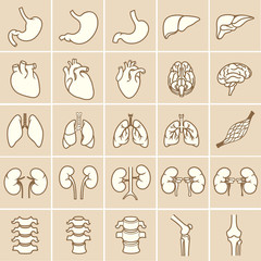 Internal human organs. Anatomy set illustration. Vector of outline medical icons for infographic.