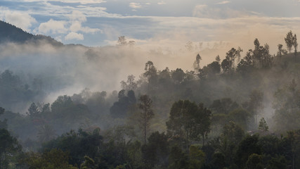 Landscape of rain forest and mountains with morning fog at Nuwara Eliya, Sri Lanka