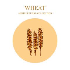 Hand drawn wheat ears sketch