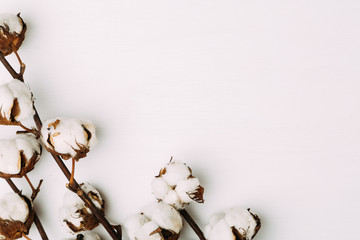 Cotton flowers on white background