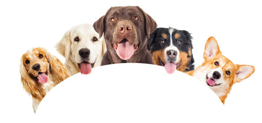 set of dogs peeking