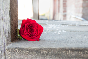 Exterior still life of a single red rose on a rustic wooden platform