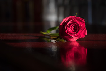 Single red rose on a polished bar against a dark blurred background