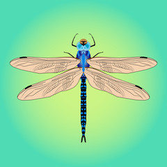 Bright beautiful blue dragonfly. Vector illustration isolated.