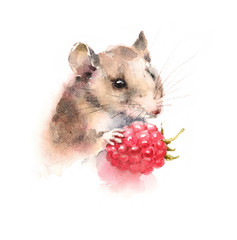 Watercolor Mouse Holding a Berry Raspberry Wild Animal Rodent Hand Drawn Illustration isolated on white background