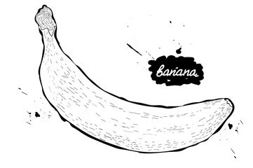 Doodle.vector illustration. black and white drawing of fruits. banana.