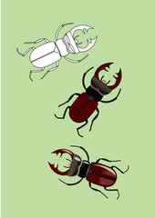 Collection of realistic stag beetles. Vector illustration, isolated on a green background.