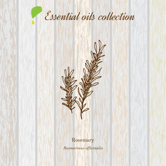 Rosemary, essential oil label, aromatic plant