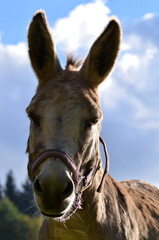 portrait of a donkey looking at the camera