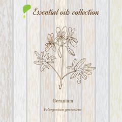 Geranium, essential oil label, aromatic plant