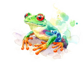 Watercolor Red-eyed Green Tree Frog Hand Painted Illustration