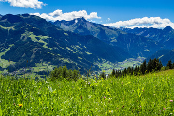 Wall Mural - Mountain view with green meadow in foreground. Zillertal High Road, Austria, Tyrol
