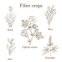 Fiber crops - cotton, sisal, flax, jute, cannabis