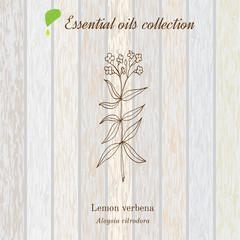 Lemon verbena, essential oil label, aromatic plant
