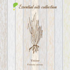 Vetiver, essential oil label, aromatic plant