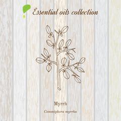 Myrrh, essential oil label, aromatic plant