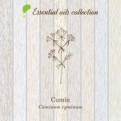Cumin, essential oil label, aromatic plant